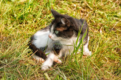 Cat walking on grass Royalty Free Stock Photography