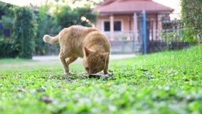 Cat walking on green field