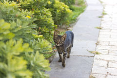 Cat walking on the green grass royalty free stock image