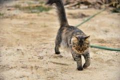Cat walking on the ground.  Stock Photo