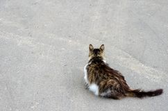 Cat walking at the ground. Copy space royalty free stock photography