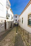 Cat walking in Lagos Portugal beautiful traditional architecture royalty free stock image