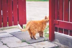 Cat Walking lejos fotografía de archivo libre de regalías