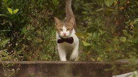 Cat Walking minuscola in giardino con il grande arco Immagini Stock Libere da Diritti