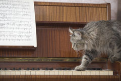 Cat Walking On Piano Keys med musikarket Royaltyfri Bild