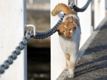 Cat on a pier Royalty Free Stock Images