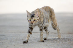 cute Cat walking on street Royalty Free Stock Images