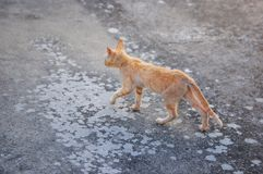 Cat Walking preciosa imagen de archivo libre de regalías