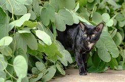 Cat Walking preta bonita Imagem de Stock Royalty Free