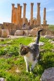 Cat walking on Roman ruins, Jerash Stock Photography
