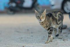 Cat walking on sandy beach Royalty Free Stock Photo