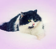 Cat walking in snow Royalty Free Stock Photo