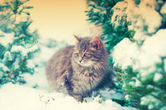 Cat walking in snow Royalty Free Stock Images