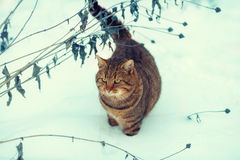 Cat walking in snow Stock Image