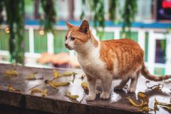 Cat walking on the street Stock Photo