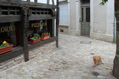 A cat is walking in a street (France) Royalty Free Stock Photography