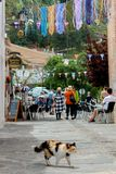 Cat walking on the streets of Pampaneira, Alpujarras, Sierra Nev stock images
