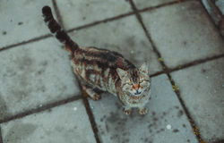 Cat walking in the streets. Up view Royalty Free Stock Photography