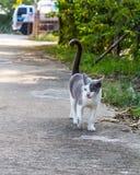 Cat walking Royalty Free Stock Image