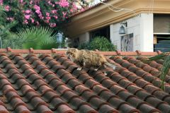 Cat walking on a tiled roof stock photography