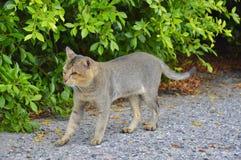 Cat walking to nature stock photo