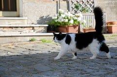 Cat walking in town stock image