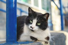 Cat walking in the yard, street black-white cat, a portrait of a street cat stock photos