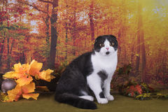 Cat walks on autumn meadow Stock Image