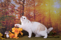 Cat walks on autumn meadow Royalty Free Stock Photography