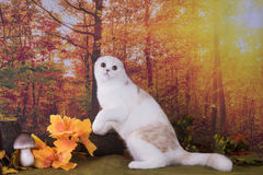 Cat walks on autumn meadow Royalty Free Stock Photo