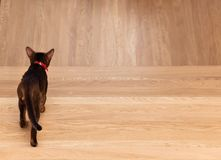 The cat walks away from problems.  Royalty Free Stock Images