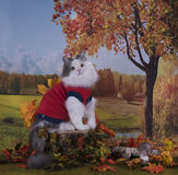 Cat walks on the edge of the forest near the village autumn day Stock Image