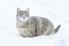 Cat Walks im Schnee lizenzfreie stockfotos