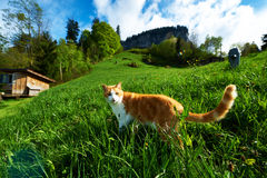 Cat walks in the meadow Stock Photos
