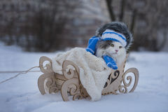 Cat walks in sledge frosty day Royalty Free Stock Images