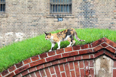 Cat walks on a wall Stock Images