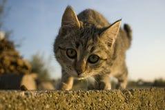 Cat on the wall. Staring at camera Royalty Free Stock Photos