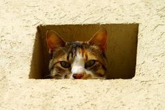 Cat in a wall Royalty Free Stock Images