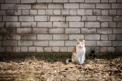 Cat by the wall Royalty Free Stock Photography