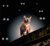 Cat on the wall Stock Photos