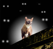 Cat on the wall Stock Images
