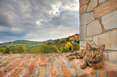 Cat on the wall. Piedmont, Italy. Stock Images