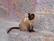 Cat on a wall, Sardinia, Italye Stock Photography
