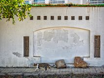 Cat and wall in Sharm el-Sheikh,, Sinai,. Egypt stock photos