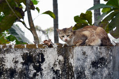 CAT ON A WALL. A cat sitting on a wall. Photo taken on Feb 2016 Stock Photos
