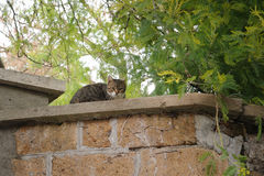 Cat on a wall Stock Images