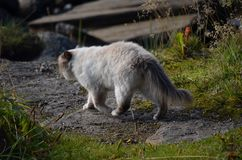 Cat wandering on dirt road. In summer Stock Images