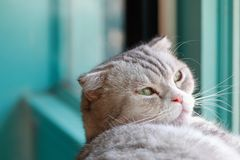 Cat want to sleep. Cat want to sleep near the window Royalty Free Stock Photo
