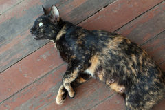 Cat want to sleep Stock Photo