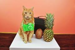 Cat Wants Tropical Vacation d'intérieur Photo libre de droits